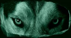 3D Mural Wall Art Wolf's Eye, Glowing in the dark, 1.50 x 0.82 m