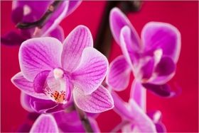 Canvas Wall Art Violet orchid, Glowing in the dark, 60 x 90 cm