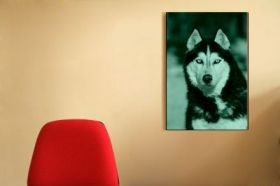 Tablou Husky siberian, luminos in intuneric, 80 x 120 cm