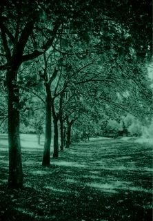 Mural Wall Art Trees in a row, Glowing in the dark, 1.83 x 1.28 m