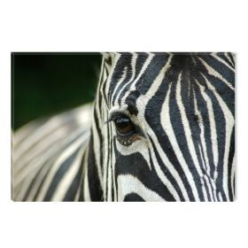 Canvas Wall Art Zebra, Glowing in the dark, 80 x 120 cm