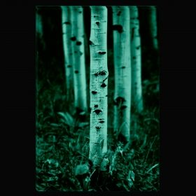 Canvas Wall Art From the birch forest, Glowing in the dark, 80 x 120 cm