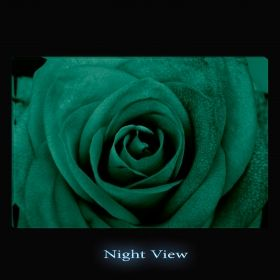 Canvas Wall Art Multicolored roses, Glowing in the dark, 60 x 90 cm