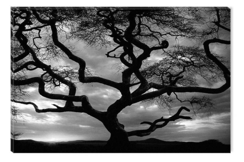 Black And White Abstract Canvas Wall Art Sunset Behind The Tree