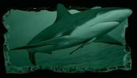 3D Mural Wall Art A friendly shark, Glowing in the dark, 1.50 x 0.82 m