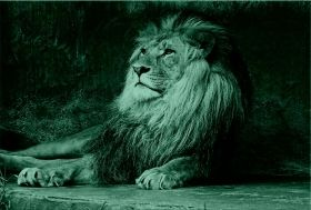 Canvas Wall Art Lion King, Glowing in the dark, 60 x 90 cm