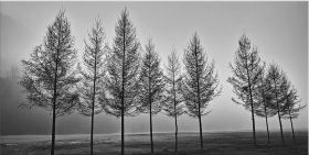 Canvas Wall Art Trees and fog, Glowing in the dark, 60 x 120 cm