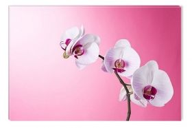Canvas Wall Art Orchids on pink, Glowing in the dark, 60 x 90 cm