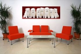 Tablou Catelusi Samoyed, luminos in intuneric, 40 x 120 cm