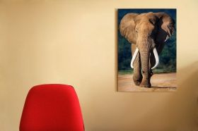 Tablou Plexiglas Elefant, luminos in intuneric, 60 x 90 cm